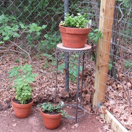 Herbs in corner