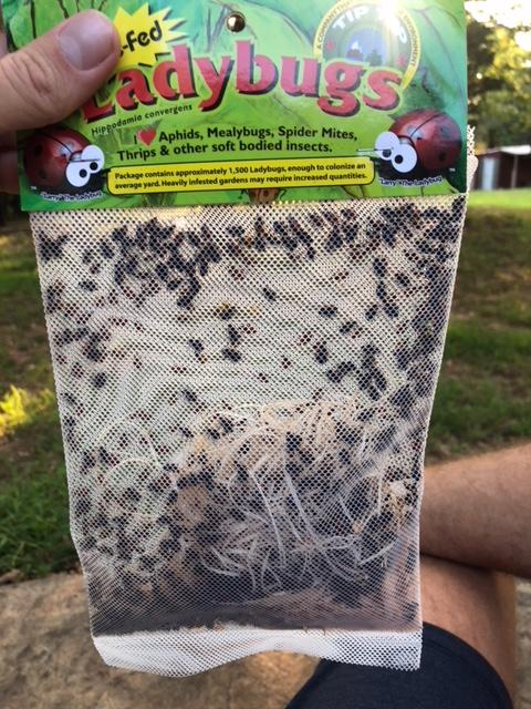 Ladybug packaging