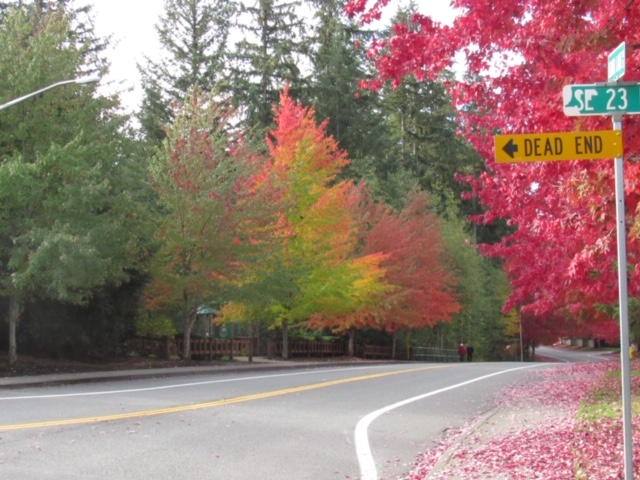 Sammamish Leaves 5